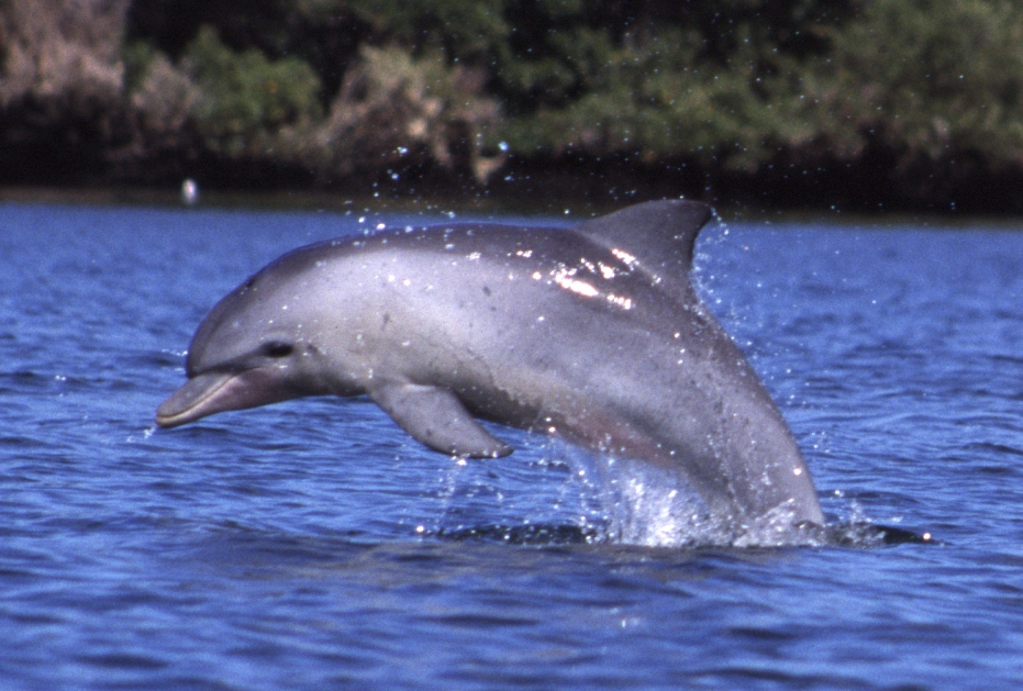 New Zealand bans swimming with dolphins